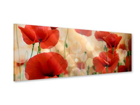 Panoramic Acrylic Print The Poppy
