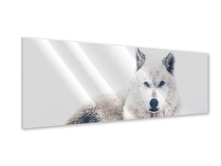 Panoramic Acrylic Print The Wolf