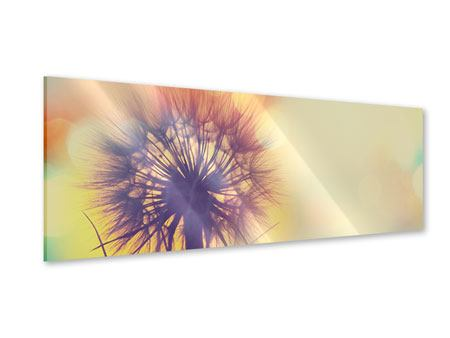 Panoramic Acrylic Print The Dandelion In The Light