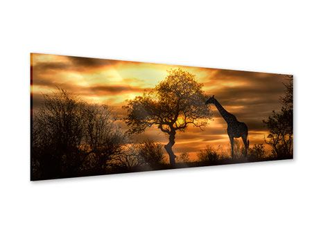 Panoramic Acrylic Print African Dreams
