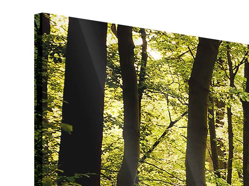 Panoramic 3 Piece Acrylic Print Sunrise In The Forest