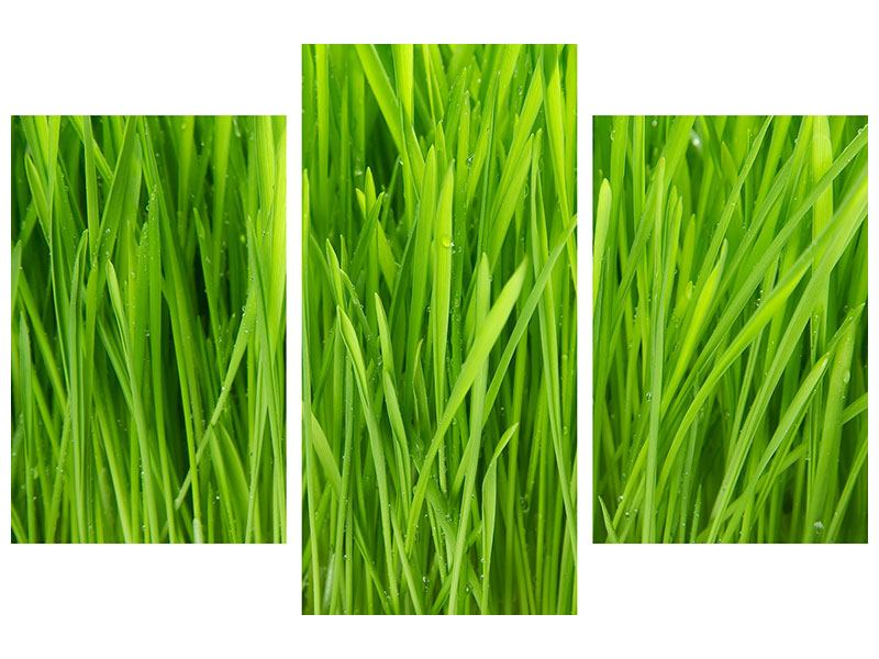 Modern 3 Piece Acrylic Print Grass In Morning Dew