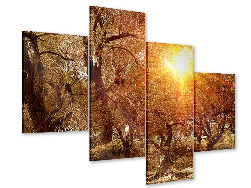 Modern 4 Piece Acrylic Print Olive Trees In Autumn Light