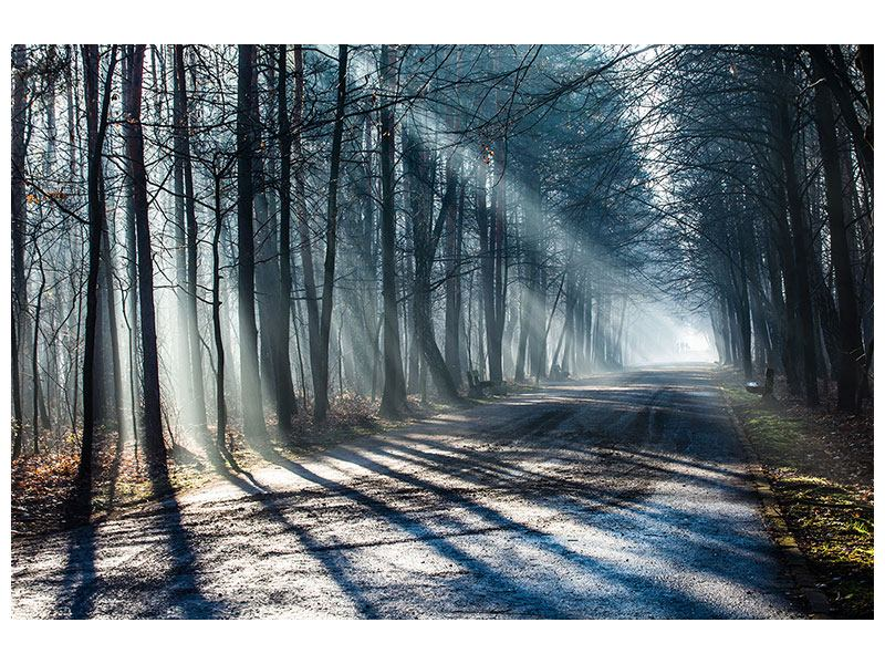 Acrylic Print Forest In The Light Beam