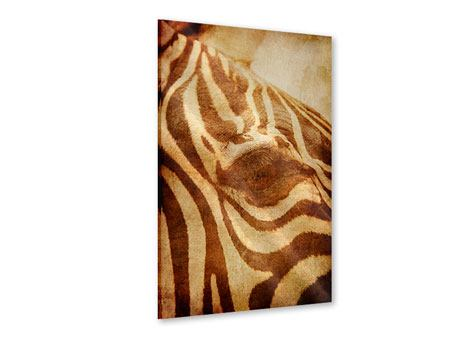 Acrylic Print Zebra Close Up