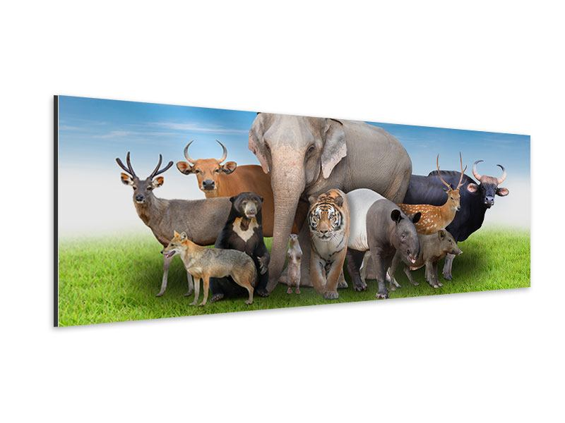 Panoramic Aluminium Print Waiting For Noah's Ark