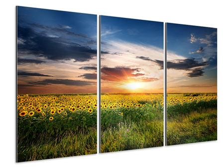 Tableau Aluminium en 3 parties Un champ de tournesols