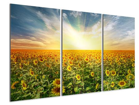 Tableau Aluminium en 3 parties Un champ plein de tournesols