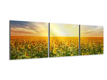Tableau Aluminium en 3 parties Panoramique Un champ plein de tournesols