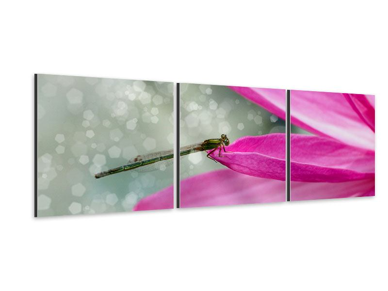 Panoramic 3 Piece Aluminium Print Dragonfly On The Lily Pad