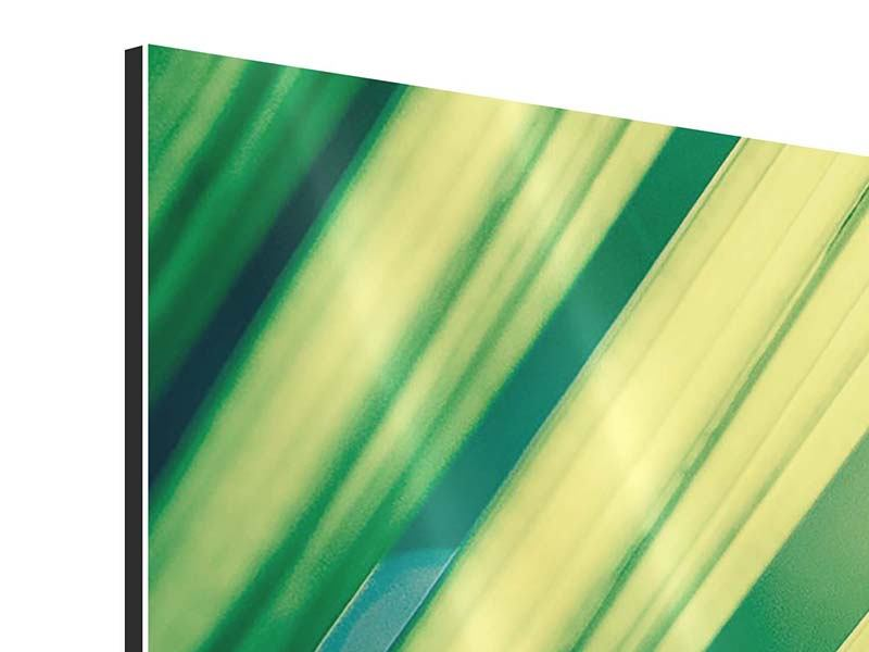 Panoramic 3 Piece Aluminium Print Illuminated Palm Leaf
