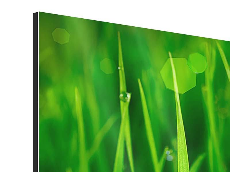 Modern 3 Piece Aluminium Print Grass With Morning Dew