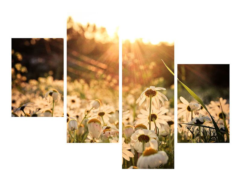 Modern 4 Piece Aluminium Print Daisies At Sunset