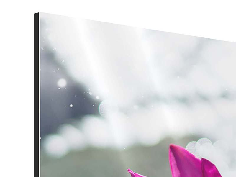 5 Piece Aluminium Print Two Water Lilies In Pink