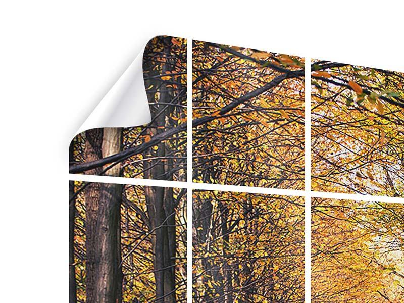 Tile Print Deciduous Forest In Autumn Light