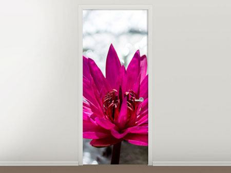 Door Mural Two Water Lilies In Pink