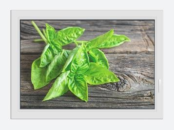 Window Print Basil Leaves