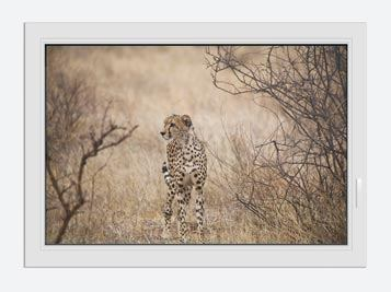 Window Print Elegant Cheetah