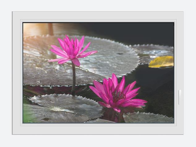 Window Print Water Lily In The Morning Dew