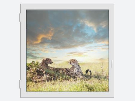 Window Print Cheetahs