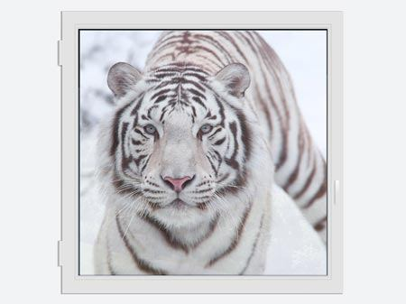 Window Print The King Tiger