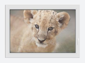 Window Print Lion Cub
