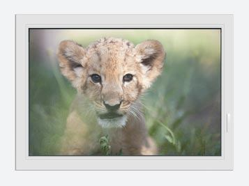Window Print Lion Baby