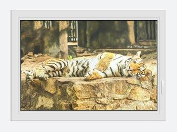 Window Print The Siberian Tiger