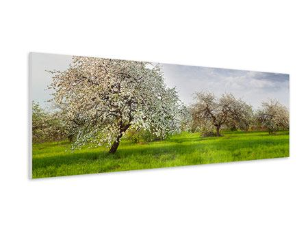 Panoramic Forex Print Apple Tree Garden