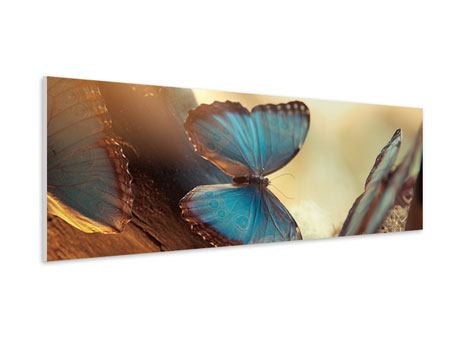 Panoramic Forex Print Butterflies