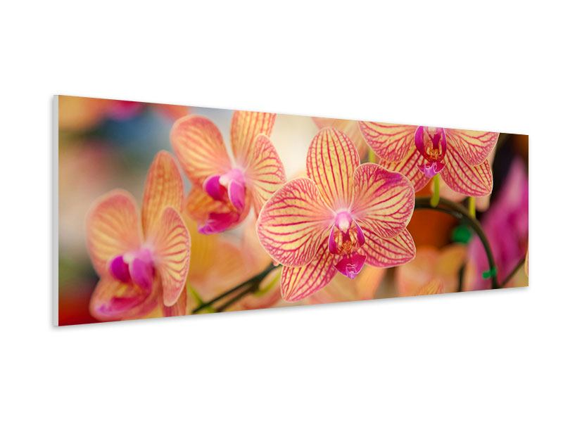 Panoramic Forex Print Exotic Orchids