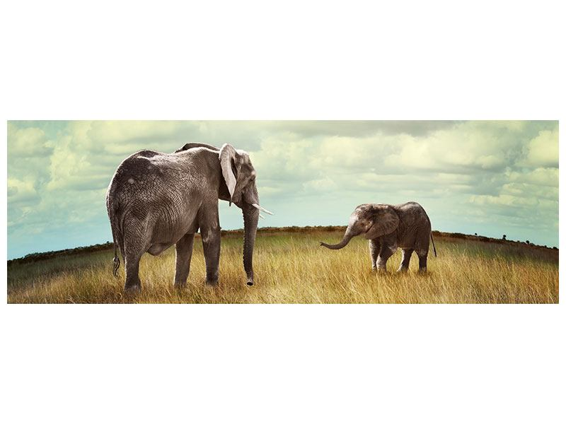 Panoramic Forex Print Elephant And Feng Shui