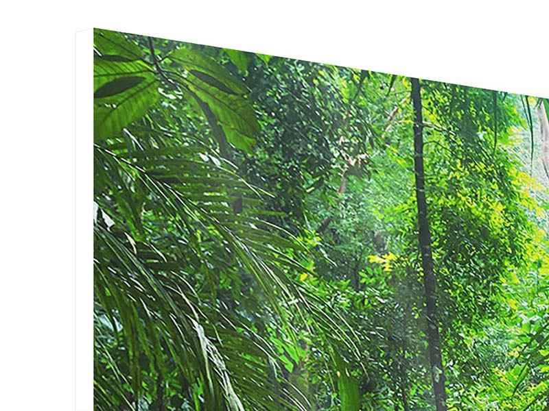 Panoramic Forex Print Waterfall Agua Azul