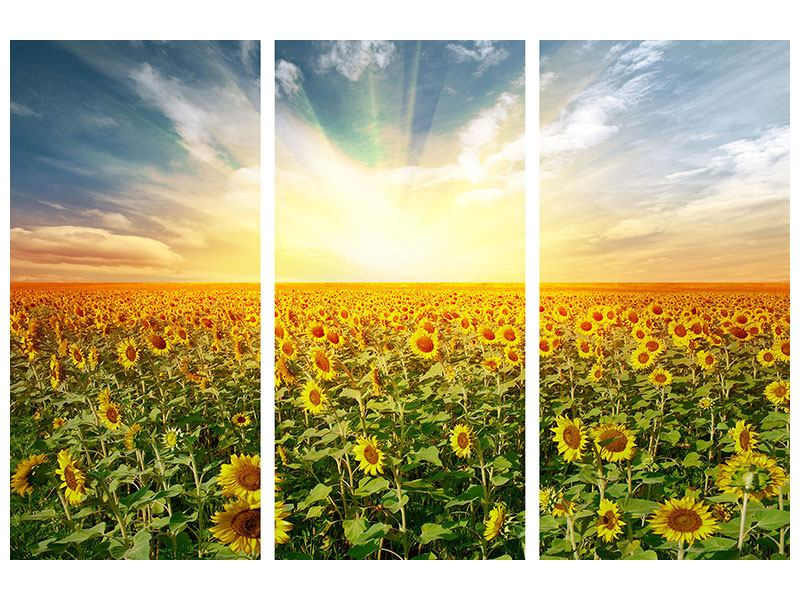 3 Piece Forex Print A Field Full Of Sunflowers