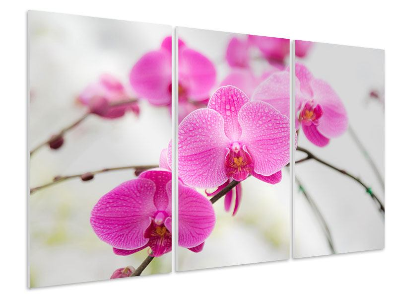 3 Piece Forex Print The Symbol Of Orchid