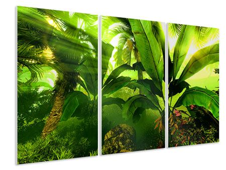 3 Piece Forex Print Sunrise In The Rainforest