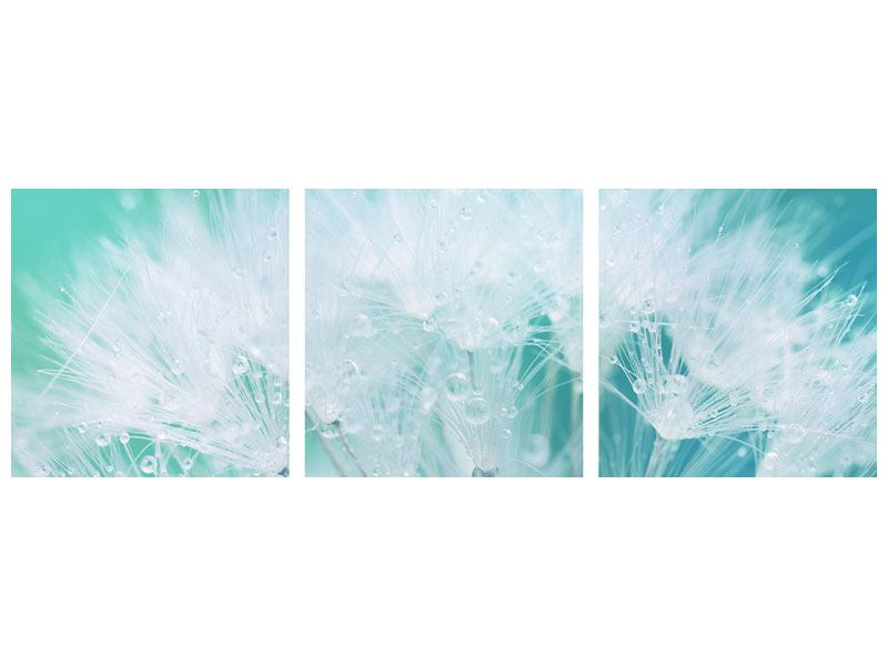 Panoramic 3 Piece Forex Print Close Up Dandelion In Morning Dew