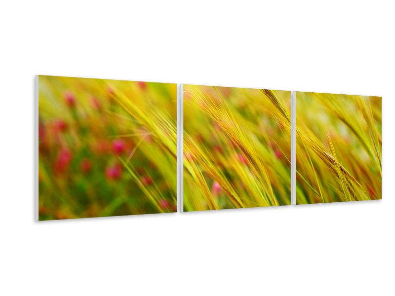 Panoramic 3 Piece Forex Print The Wheat Field