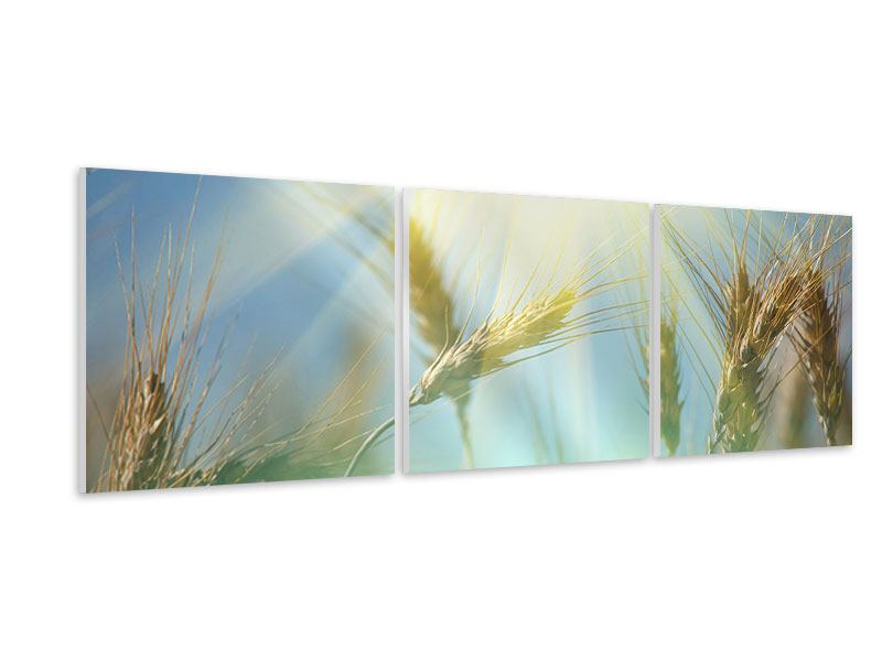 Panoramic 3 Piece Forex Print King Of Cereals