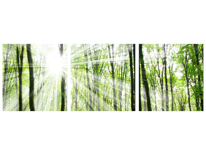 Panoramic 3 Piece Forex Print Magic Light In The Trees
