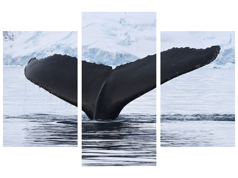 Modern 3 Piece Forex Print The Humpback Whale