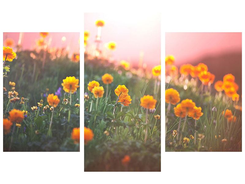 Modern 3 Piece Forex Print The mountain Meadow