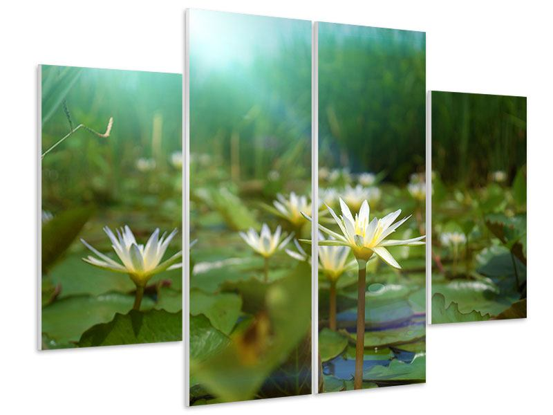 4 Piece Forex Print Waterlily Pond