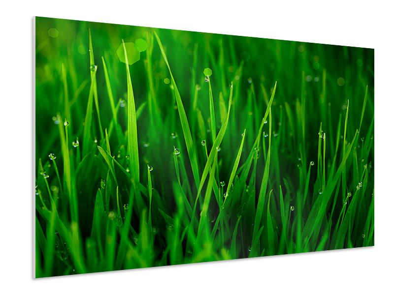 Forex Print Grass With Morning Dew