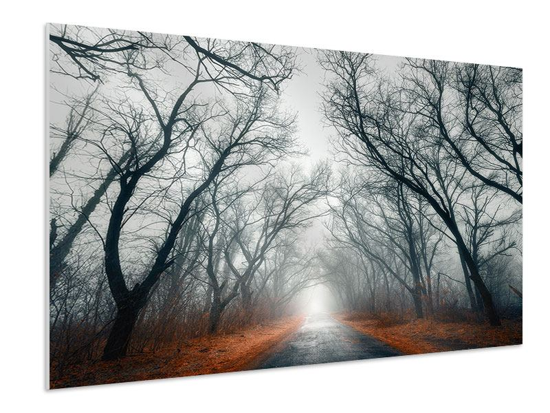 Forex Print Mysterious Mood In The Forest