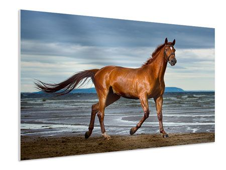 Forex Print A Thoroughbred At The Sea