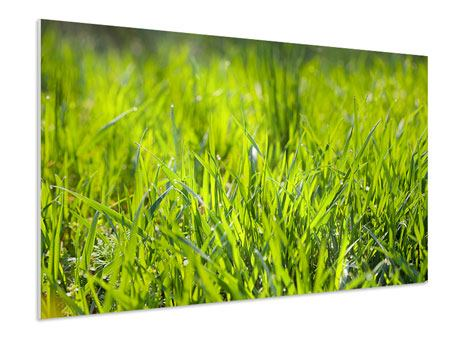 Forex Print Bright Grass In Morning Dew