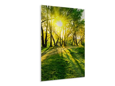 Forex Print Forest Path In Sunlight