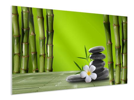 Forex Print Bamboo