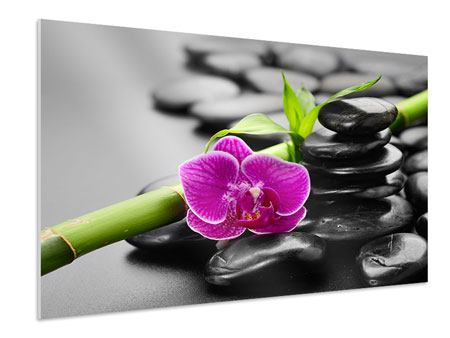 Forex Print Feng Shui Orchid